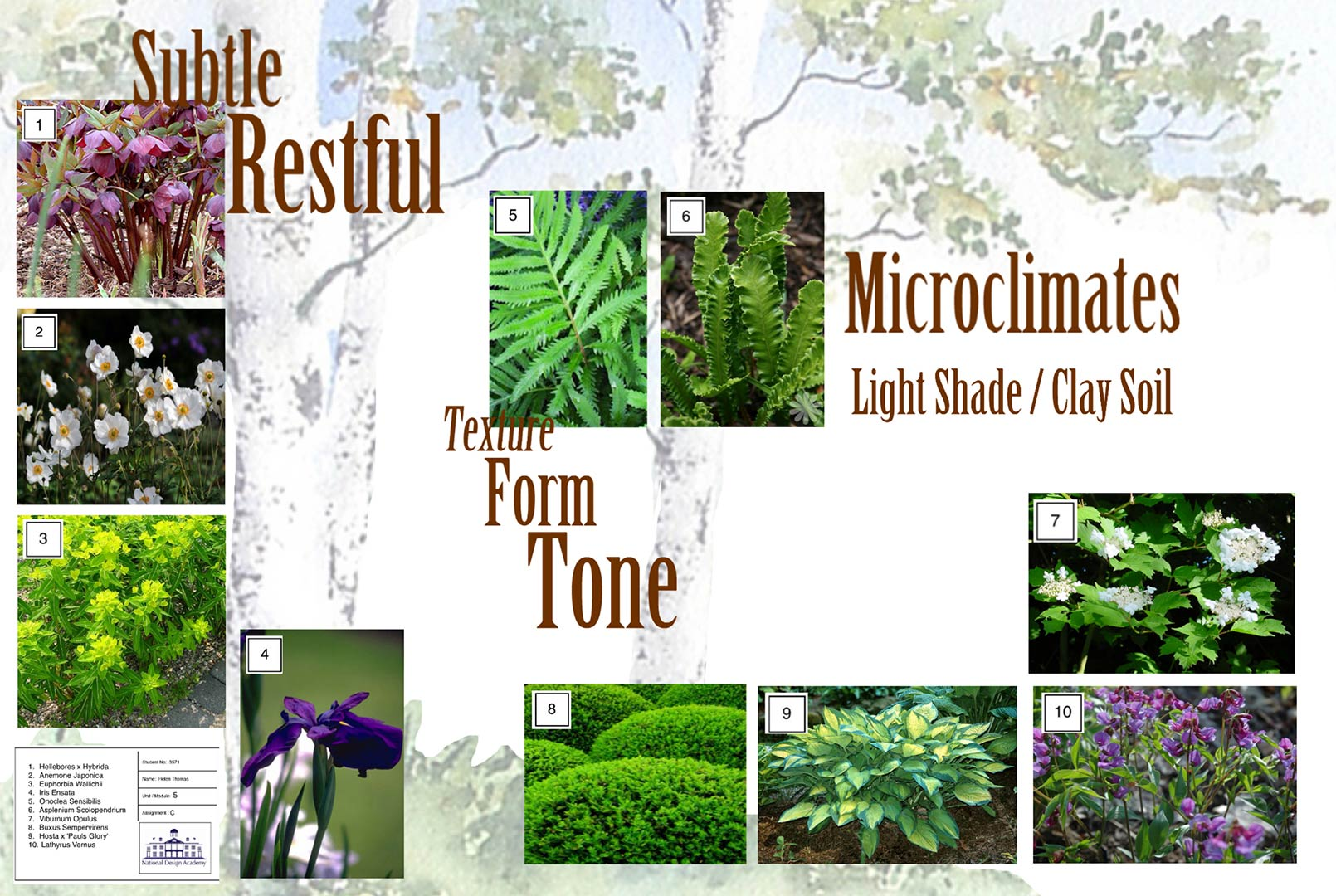 National Design Academy Diploma Garden Design Presentation 09