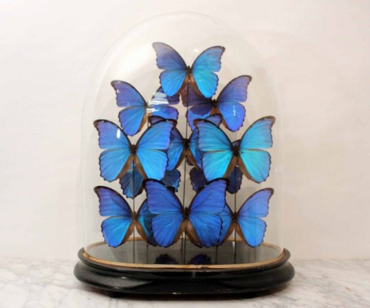 Trends First Victorian glass dome with morpho didius butterflys. Sex and the City 2 set design inspired interior design ideas. Carrie and Big's hallway.