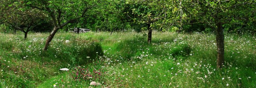 Wildlife Friendly Gardens