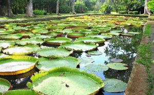 UNDERSTANDING PLANTS