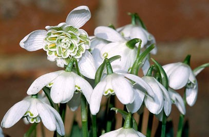 Summoning The Spring With Snowdrops National Design Academy Blog
