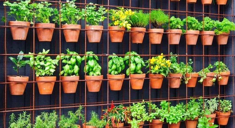 Top 5 Garden Trends for 2020 - National Design Academy